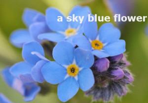 a sky blue flower