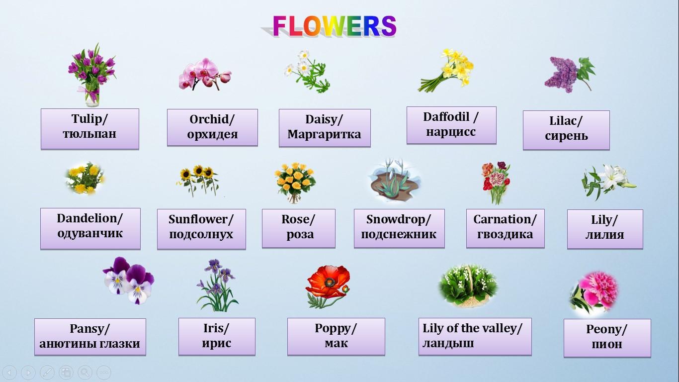 цветы на английском языке