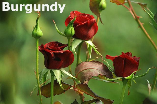 burgundy-4392345_640