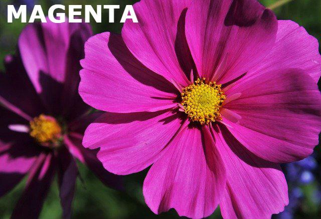 flower-4474657_640